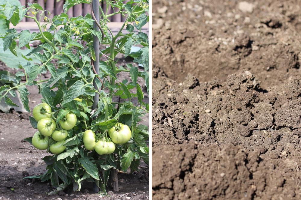 Tomaten brauchen das richtige Substrat