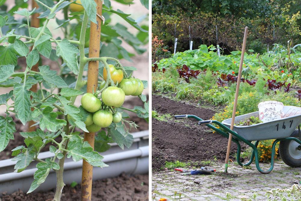 tomaten pflanzen wann ist die beste pflanzzeit. Black Bedroom Furniture Sets. Home Design Ideas