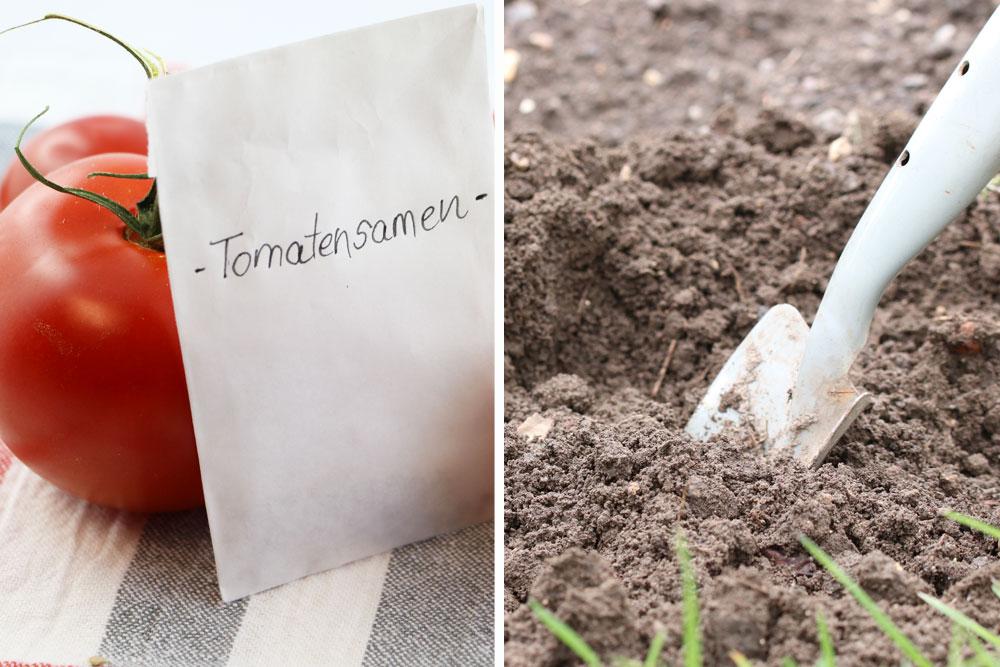 Tomaten säen im eigenen Garten