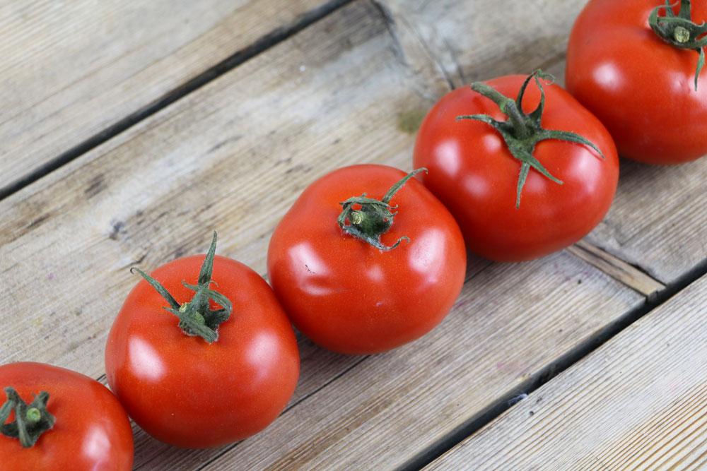 Tomatenpflanzen abhärten