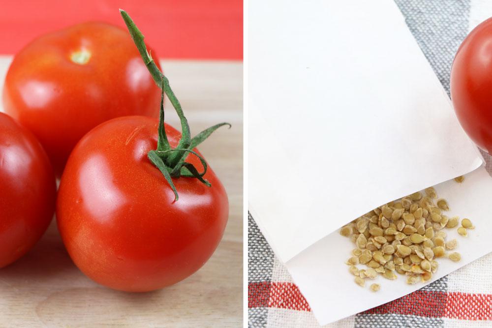 tomaten pflanzen selber ziehen so gelingen anzucht und. Black Bedroom Furniture Sets. Home Design Ideas
