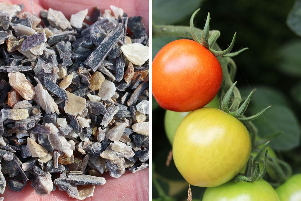 verschiedene Tomatendünger erhältlich