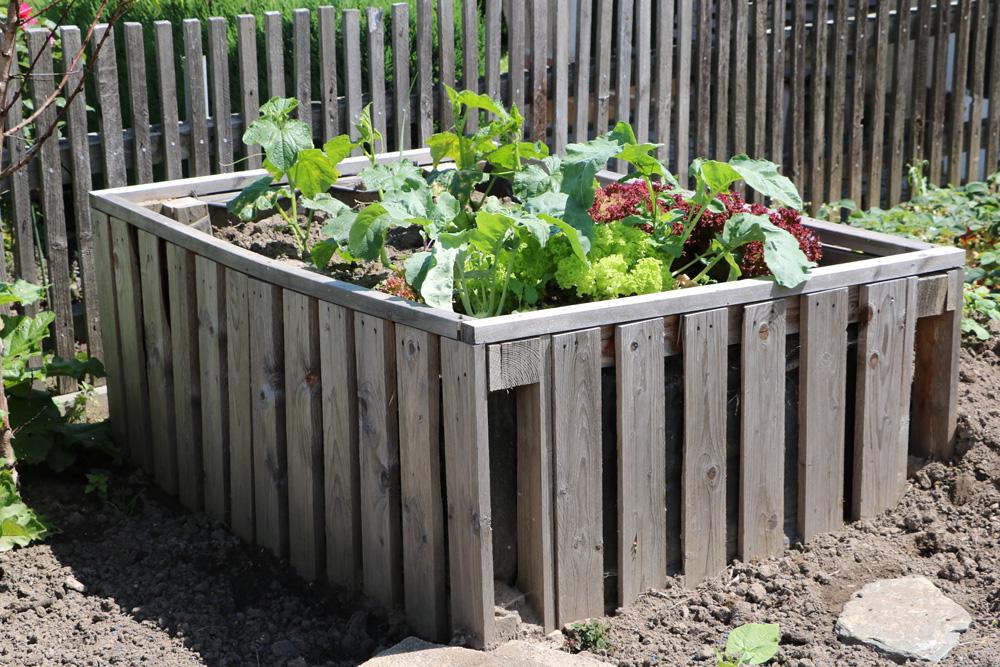 tomaten im hochbeet infos zu pflanzabstand pflege und. Black Bedroom Furniture Sets. Home Design Ideas