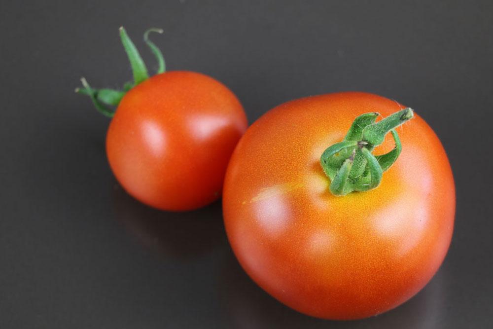 frische Tomaten aus eigenem Anbau