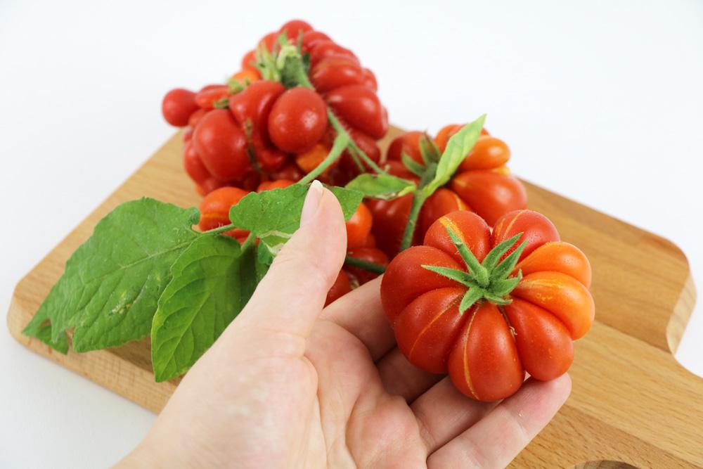 Voyage-Tomate - Reisetomate