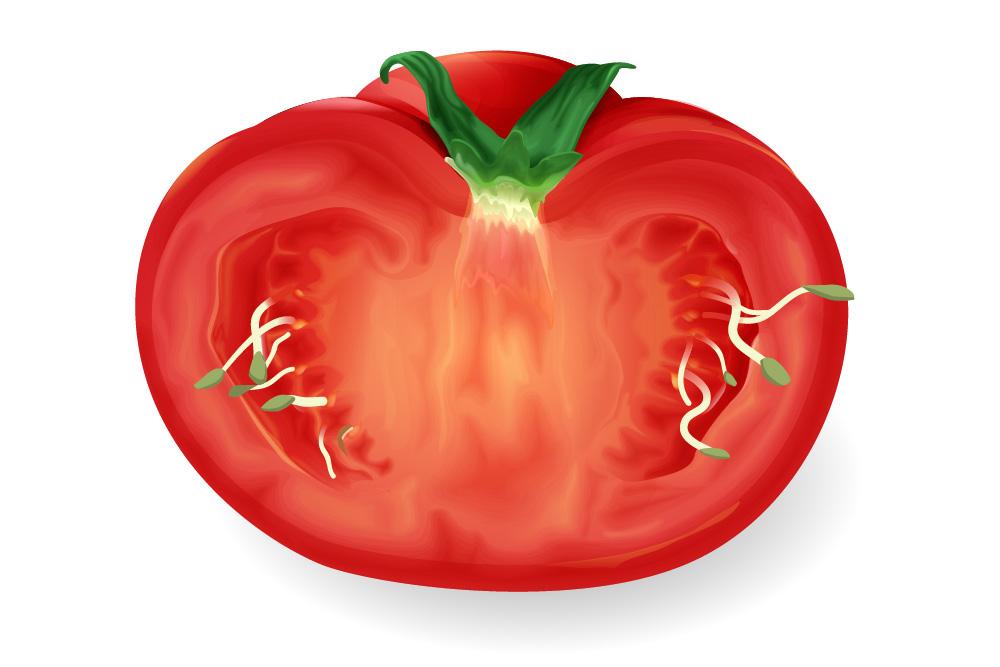 Tomate keimt von innen