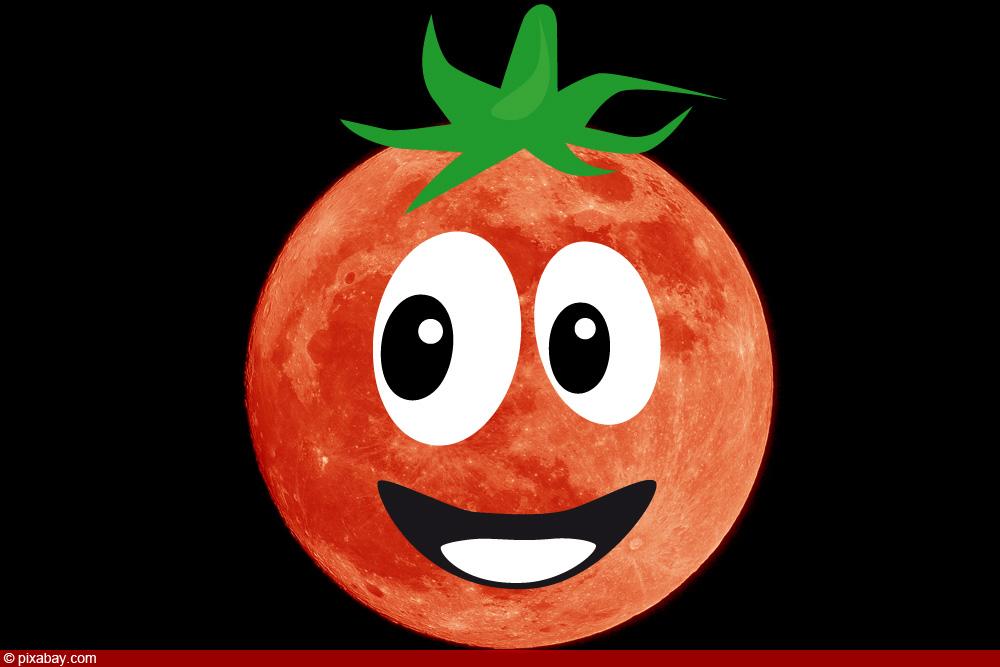 Tomaten nach Mondkalender anbauen