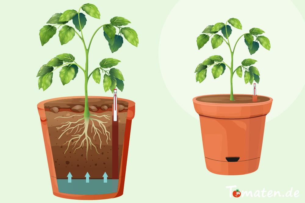 Pflanzkübel für Tomaten mit Wasserabzug