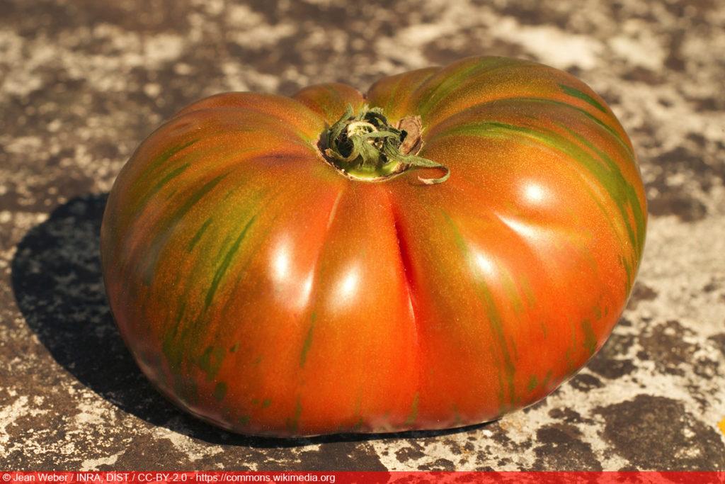 Black Zebra - Tomatensorte