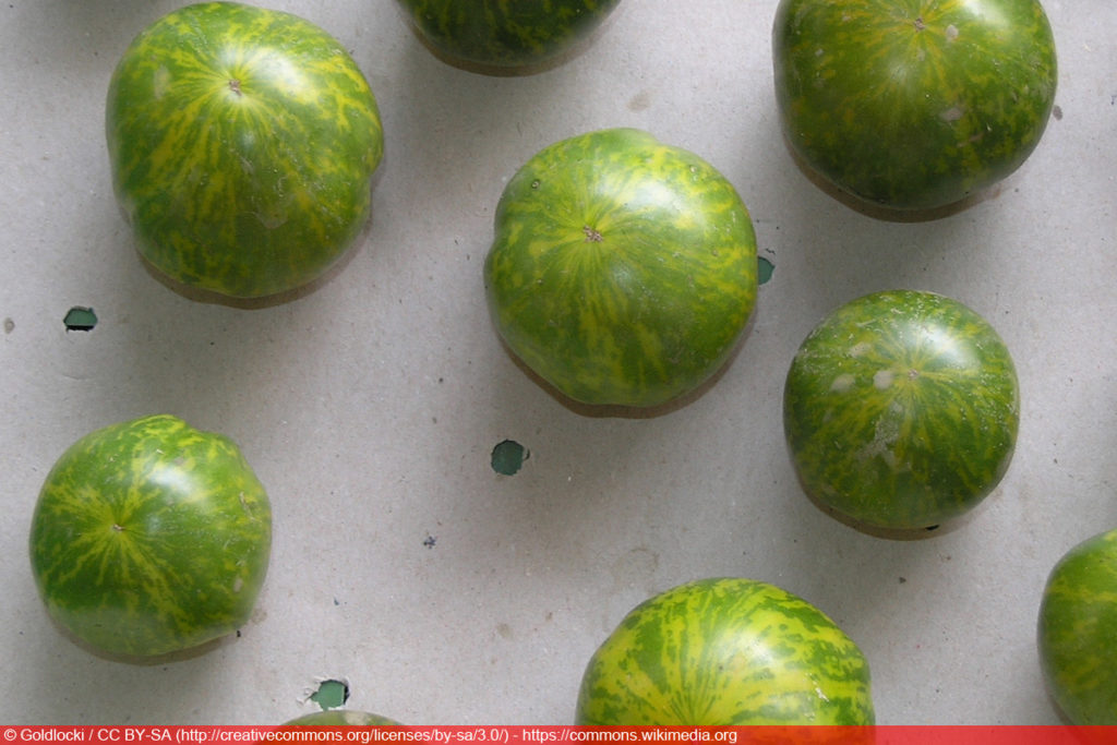 'Green Zebra' Tomatensorte