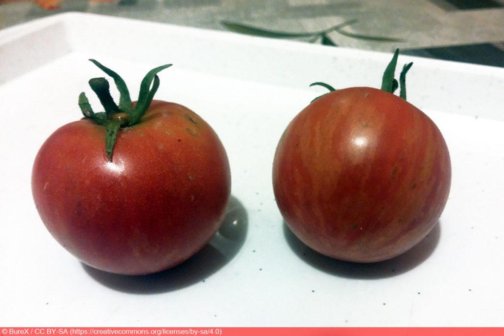 Tigerella Tomate