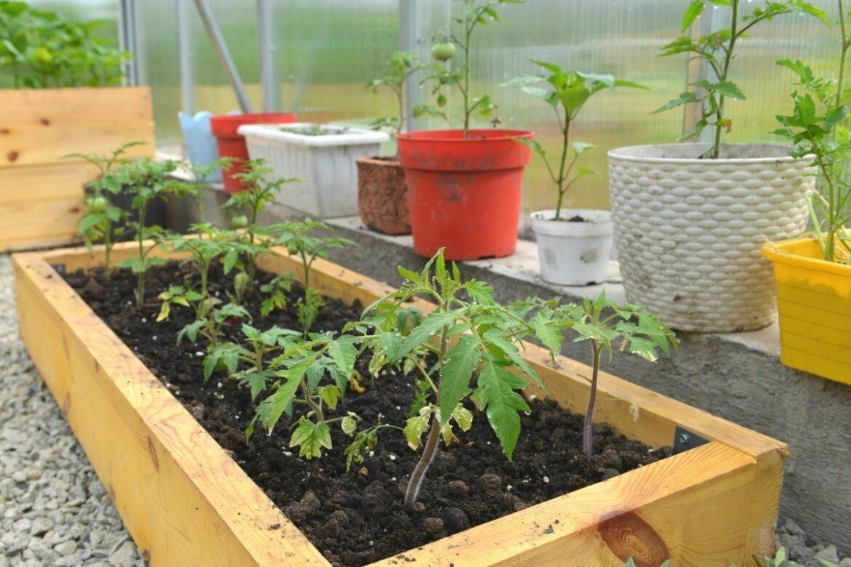 Verschiedene Pflanzkübel für Tomaten