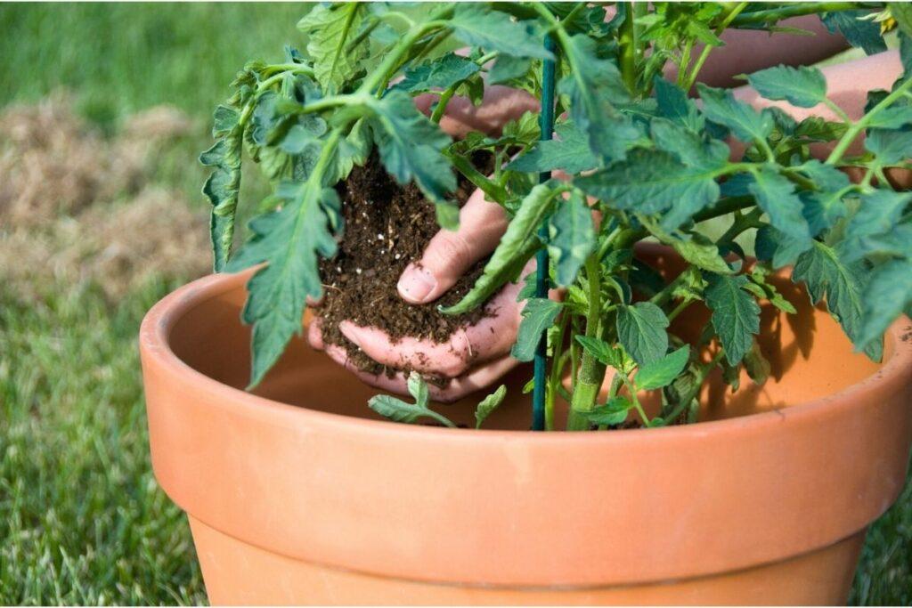 Pflanzkübel für Tomaten aus Ton