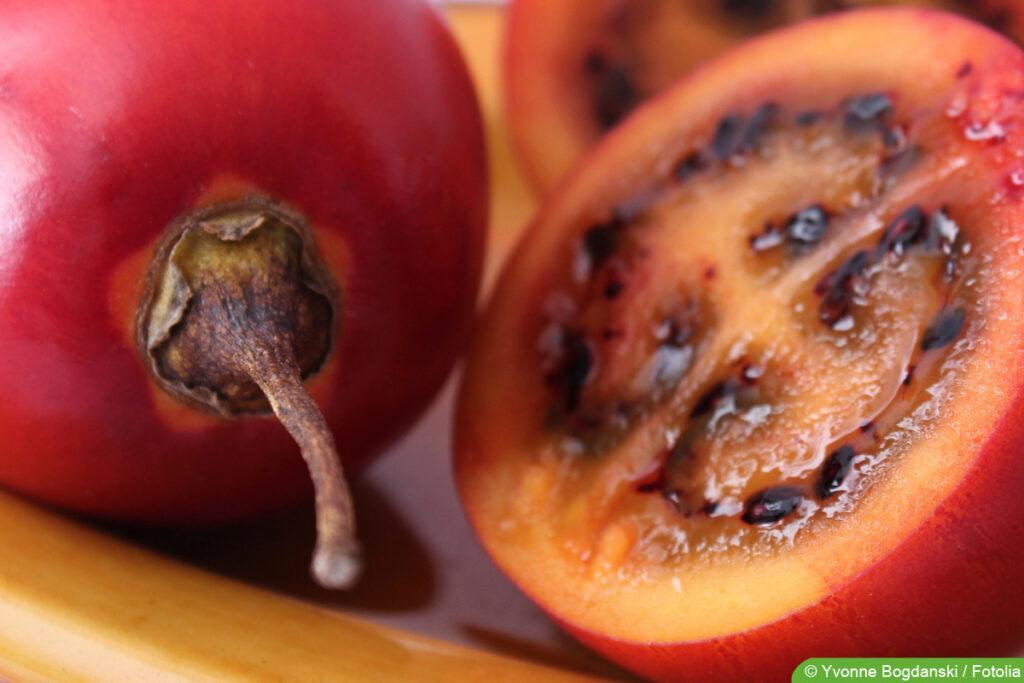 reife rote Tamarillo - Baumtomate - Solanum betaceum