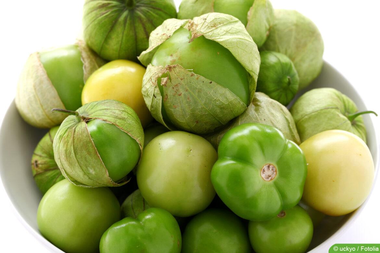 Tomatillo - Hüllentomate - Physalis philadelphica